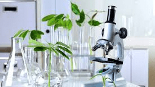 growing seeds and microscope